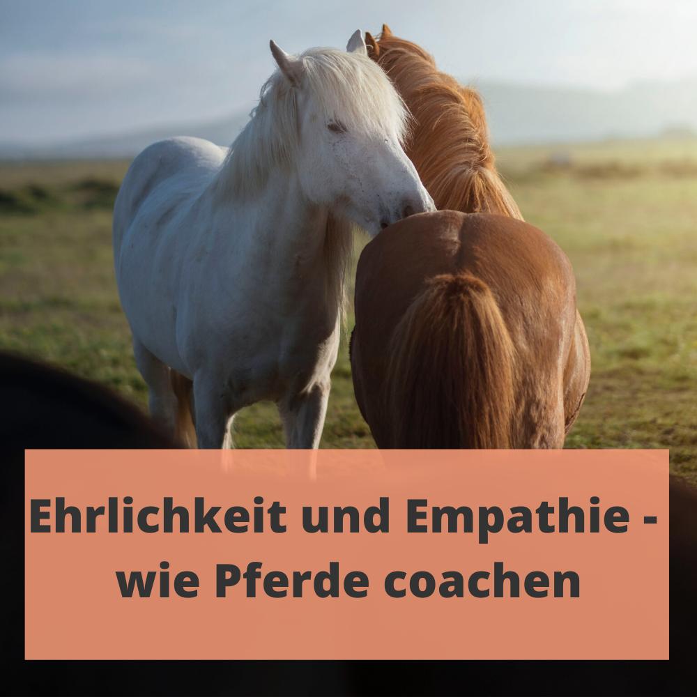 Pressebericht Eva Fischer