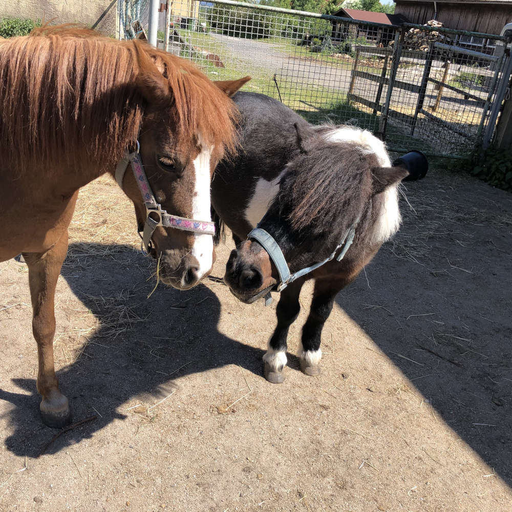 horse assisted coaching mit ponys