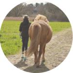Teilnehmerstimmen Pferdecoaching