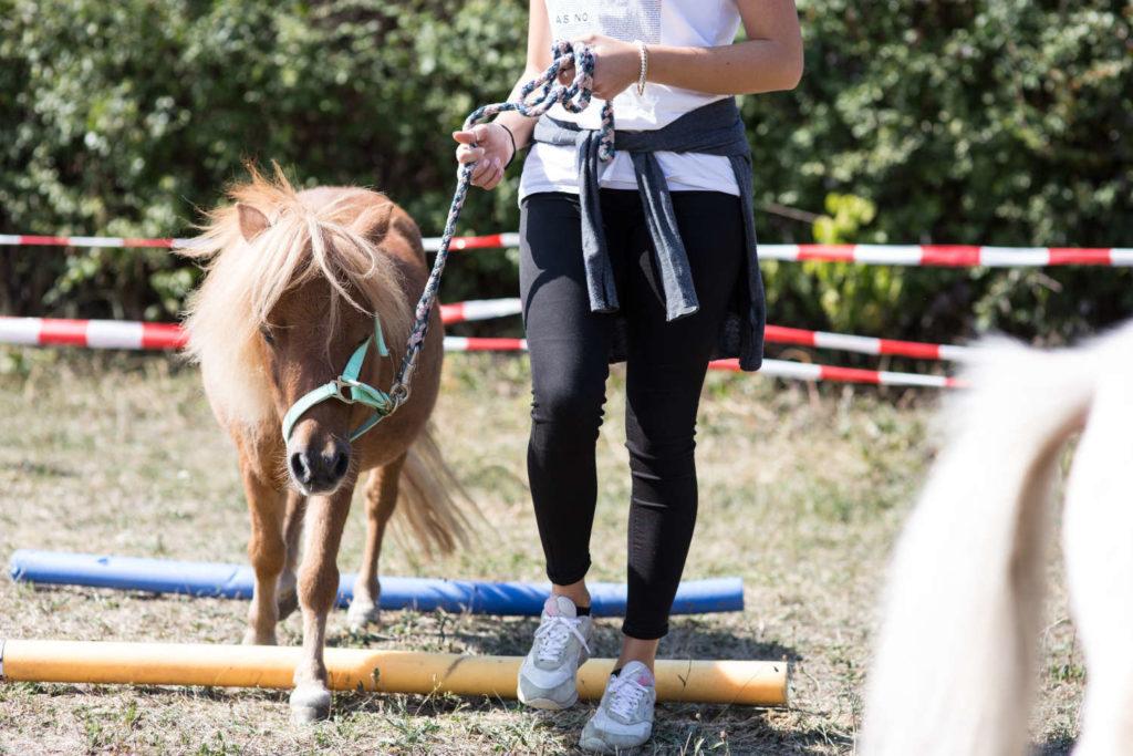 pferdegestuetztes Coaching mit Pony