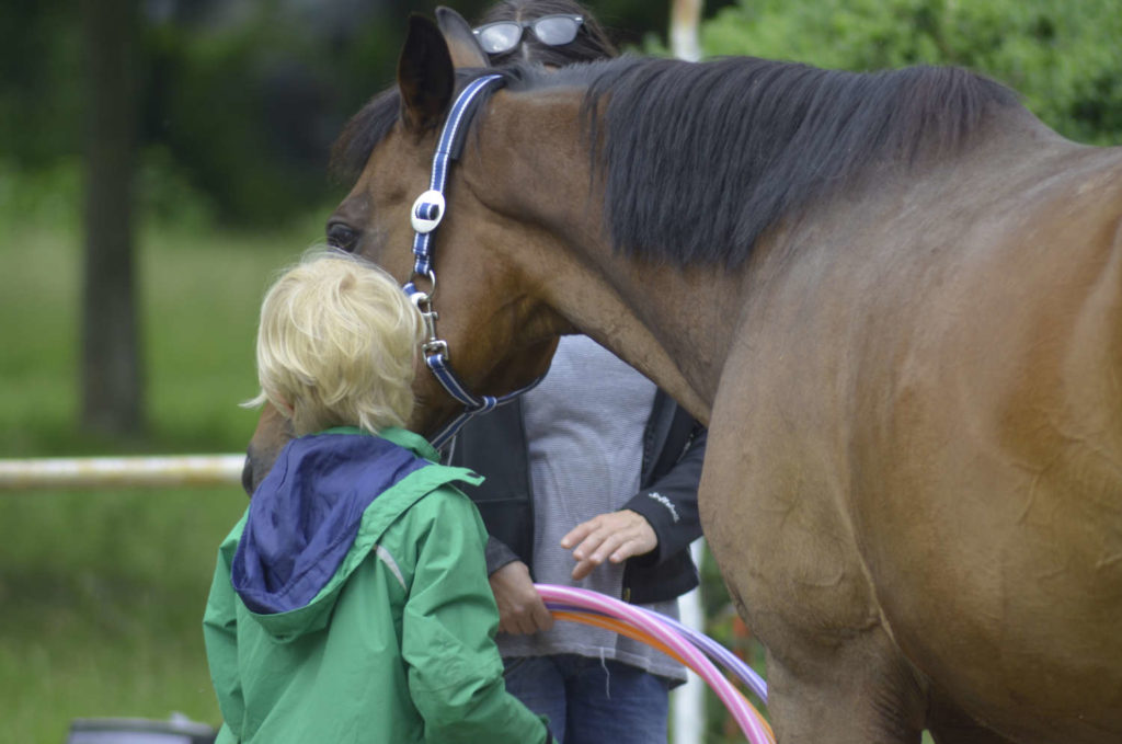 Kinder horse assisted coaching