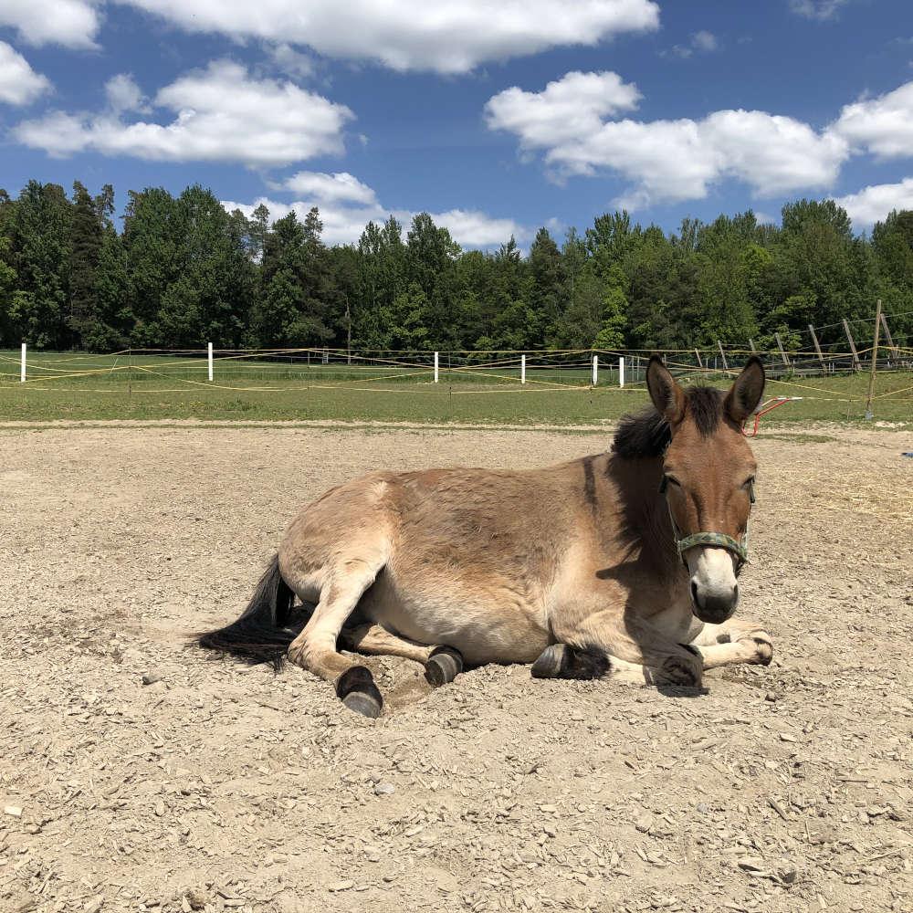 Pferdecoaching am Zwerenz-Hof