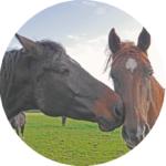 pferdecoaching - teilnehmerstimmen