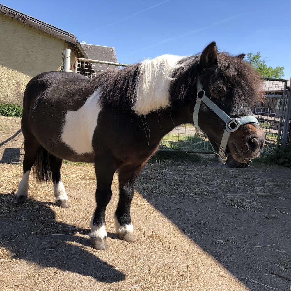 Ponys im Pferdecoaching