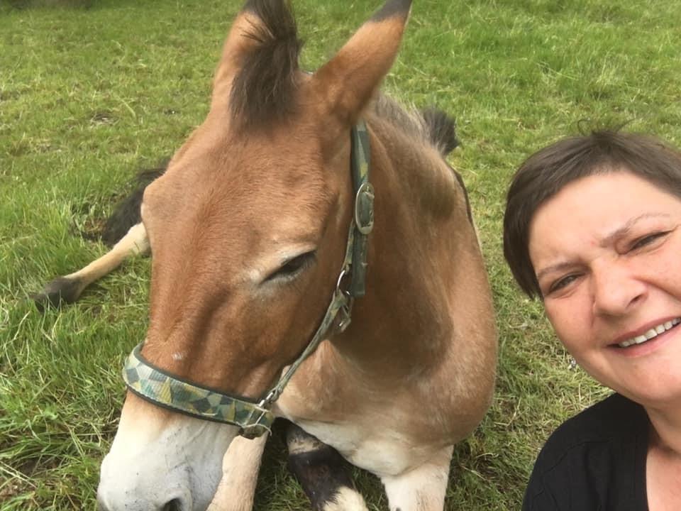 pferdecoaching mit Muli