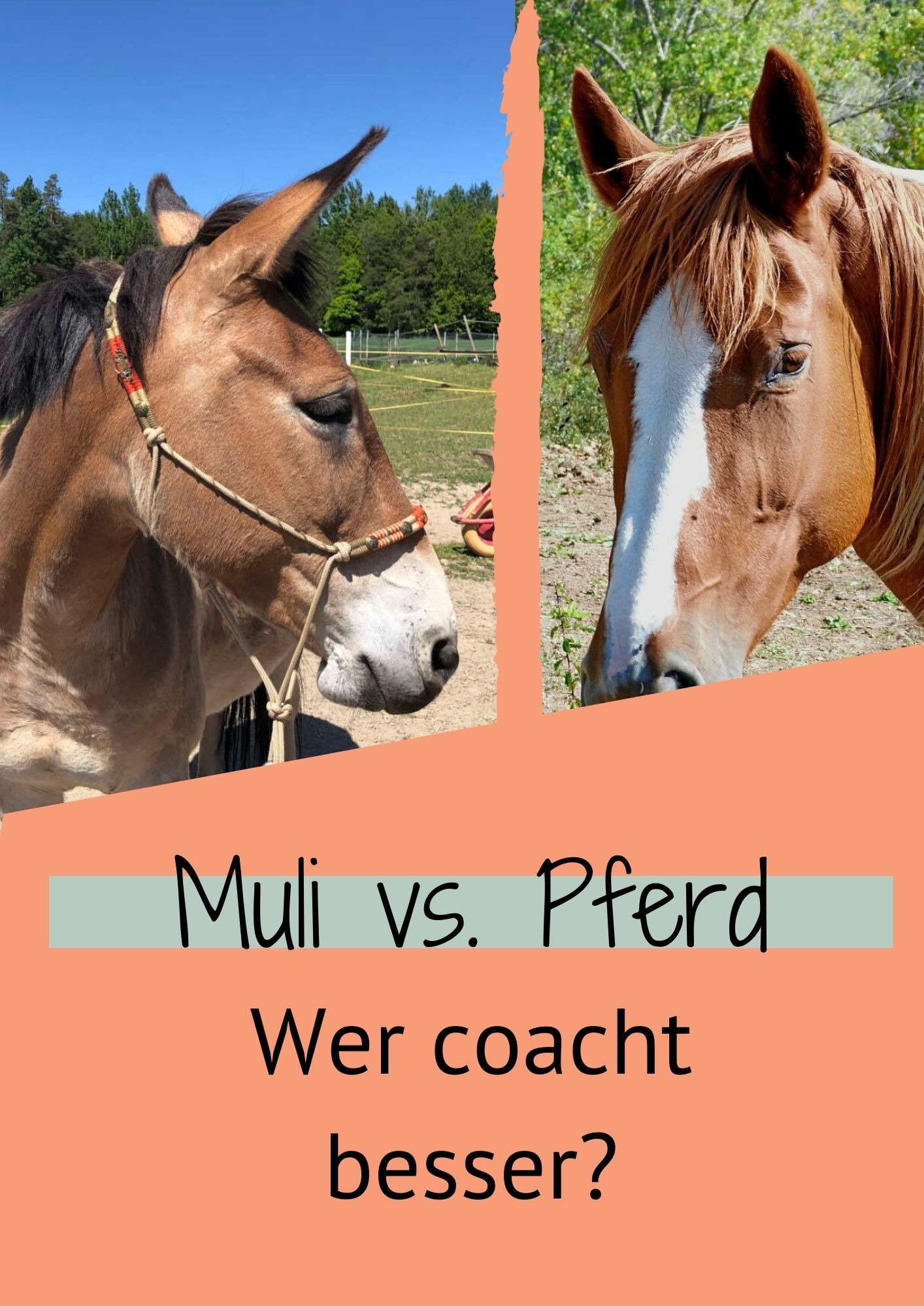 muli vs. Pferd - wer coacht besser?
